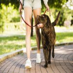 Dog Park rules and etiquettes: Dos and Don'ts