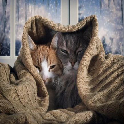 Cat Care in winters