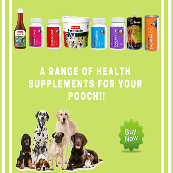 Dog Health Supplements