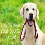 Walk Your Pet Month: Tips To Walk Your Dog On Leash!