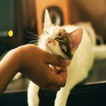 9 Signs That Show You Are A Cat Person By Heart